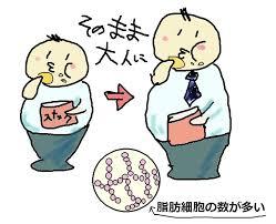 脂肪細胞 数